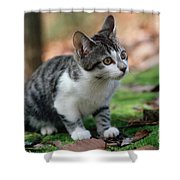 Young Manx Cat Shower Curtain