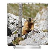 Young Marmot Shower Curtain