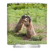 Young Marmots Shower Curtain