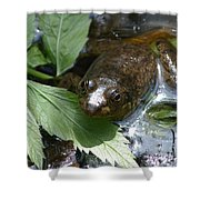 Young Mill Lake Frog II Shower Curtain