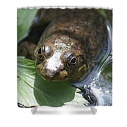 Young Mill Lake Frog Shower Curtain