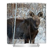 Young Moose 3 Shower Curtain
