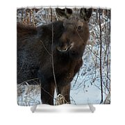 Young Moose 4 Shower Curtain