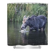 Young Moose Shower Curtain