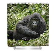 Young Mountain Gorilla Shower Curtain