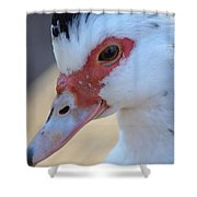 Young Muscovy Closeup Shower Curtain