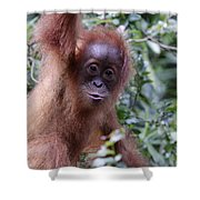 Young Orangutan Kiss Shower Curtain