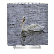 Young Pelican Shower Curtain