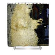Young Polar Bear And Boy  Shower Curtain