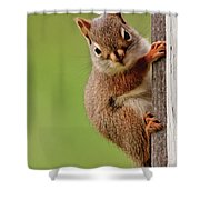 Young Red Squirrel Shower Curtain