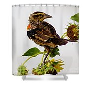 Young Redwing In The Wind Shower Curtain