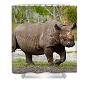 Young Rhinoceros Shower Curtain