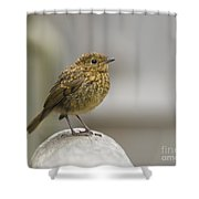 Young Robin Shower Curtain