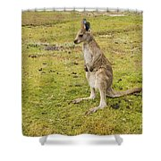 Young Roo Shower Curtain