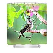 Img_ 6761  - 10x8 Shower Curtain