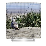 Young Seagull No. 1 Shower Curtain