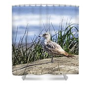 Young Seagull No. 2 Shower Curtain