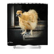 Young Silkie Shower Curtain