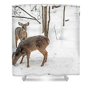 Young Spike Buck And Doe Whitetail Deer In Snowy Woods Shower Curtain