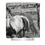 Young Stallions Shower Curtain