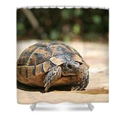Young Tortoise Emerging From Its Shell Shower Curtain