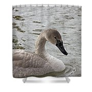 Young Trumpeter Shower Curtain