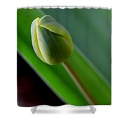 Young Tulip Shower Curtain