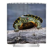Young Turtle Shower Curtain
