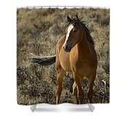Young Wild Mare   #0307 Shower Curtain