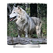 Young Wolf Shower Curtain