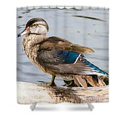 Young Wood Duck Shower Curtain