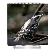 Young Woodpecker Shower Curtain
