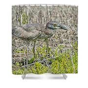 Young Yellow-crowned Night Heron Shower Curtain