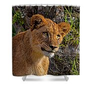 Your Lioness Shower Curtain