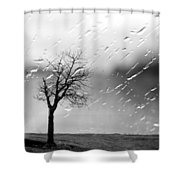 Your Tears I Root Shower Curtain