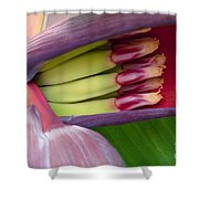 Your Treasure - Mai'a Maoli - Tropical Hawaiian Banana Flower  Shower Curtain