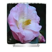 Youthful Camelia Shower Curtain by Maria Urso