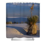 Yucca At White Sands Shower Curtain