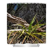 Pedernales Park Texas Yucca By The Dead Tree Shower Curtain