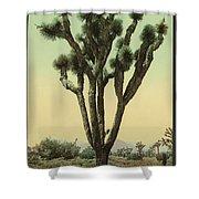 Yucca Cactus At Hesperia California Shower Curtain