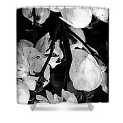 Yucca Flowers Shower Curtain