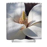 Yulan Magnolia  4591 Shower Curtain