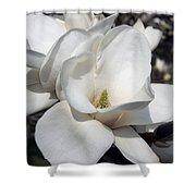 Yulan Magnolia  4753 Shower Curtain