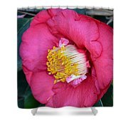 Yuletide Camelia Shower Curtain
