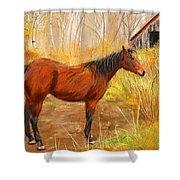 Yuma- Stunning Horse In Autumn Shower Curtain