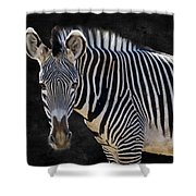 Z Is For Zebra Shower Curtain