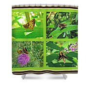 Zabulon Skipper Butterfly - Poanes Zabulon Shower Curtain