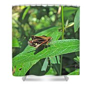 Zabulon Skipper Butterfly - Poanes Zabulon - Female Shower Curtain