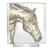 Zach Shower Curtain