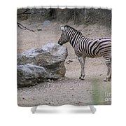 Zebra And Rock Shower Curtain